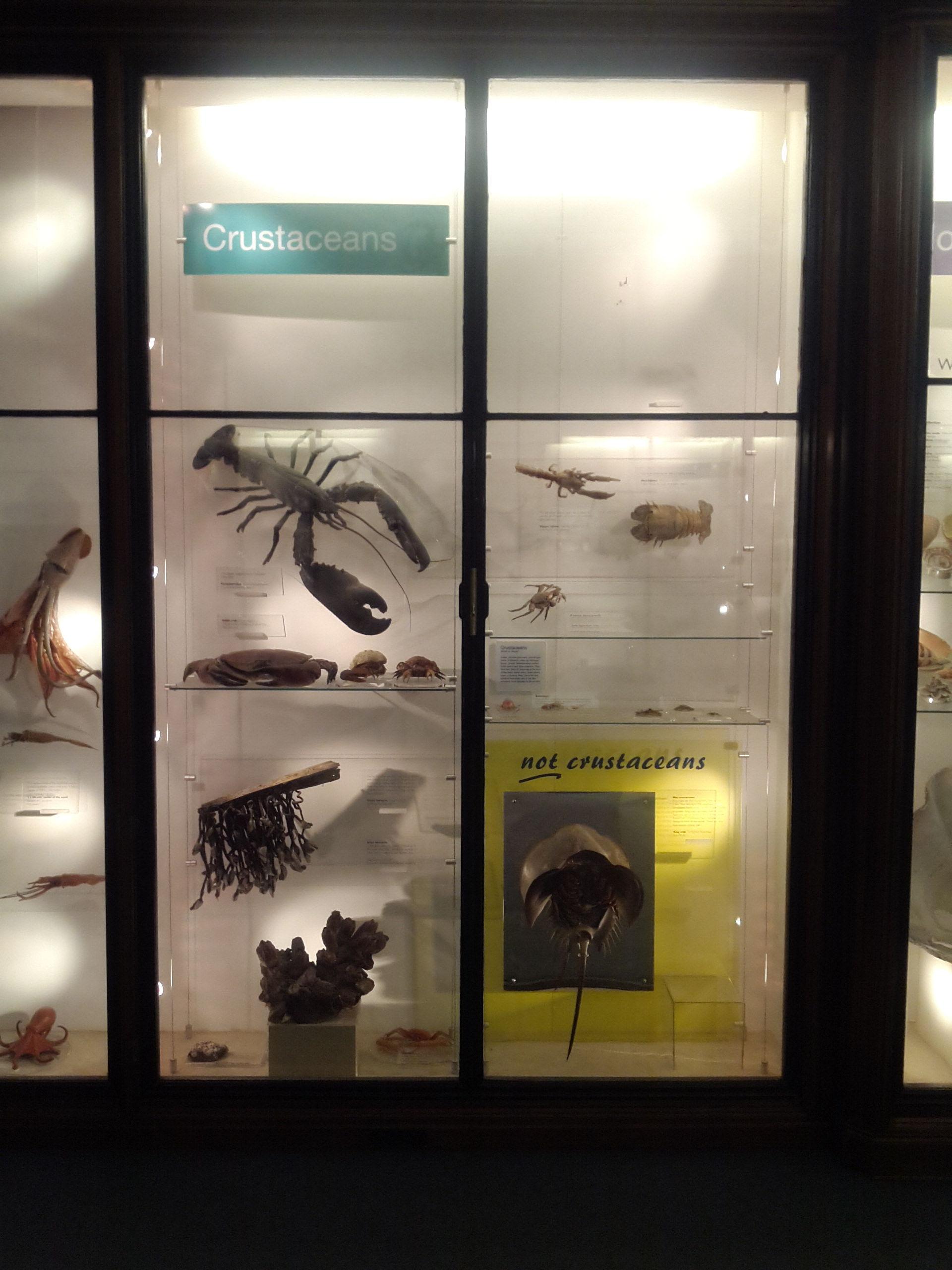 Overview of marine invertebrates