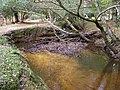 Natural meander in canalised Highland Water, New Forest - geograph.org.uk - 277814.jpg
