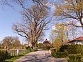 Naturdenkmal 1504-1 Eiche im Wohldweg, Bild 1.JPG
