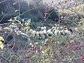Nature - Natura (15457571496).jpg