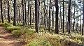 Naturpark und Biosphärenreservat Pfälzerwald - panoramio (14).jpg