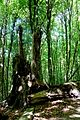 Naturschutzgebiet Granitz - Forst Werder (5).jpg