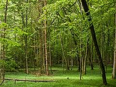 Naturwaldreservat Wolfsruhe.jpg