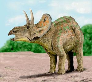 Lance Formation - Nedoceratops hatcheri