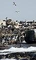 New 0465 Penguin on Seal Island JF2.jpg