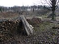 Newly coppiced area at the Weald and Downland Museum - geograph.org.uk - 1158016.jpg
