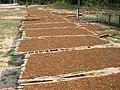 Nicotiana tabacum séchoir Laos.jpg