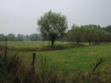 Niederrhein (Region) - Wikiwand