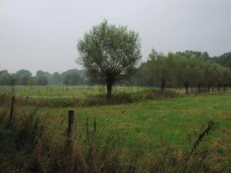 Lower Rhine region - Niederrhein