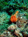 Nudibranch Kreta 2009.jpg