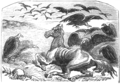 OSR Mexico D518 the horse and the zapilotes.png