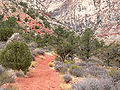 Oak Creek Canyon trail 1.jpg