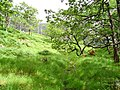 Oakwoods, Glen Beasdale - geograph.org.uk - 219353.jpg