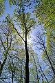 Oberharmersbach Bäume 2.jpg