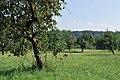 Obstbäume im Greutterwald (1).jpg