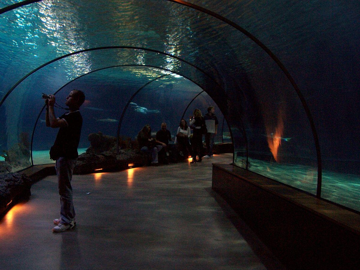 Image Result For Aquarium Rotterdam