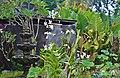 Orchid Garden Bali Indonesia - panoramio (28).jpg