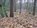 Orienteering in Tilgate Forest, Nr Crawley, West Sussex - geograph.org.uk - 24000.jpg