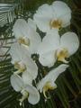 Orquidea010.png