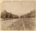 Osetinskii Military Highway, 1886.jpg