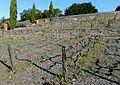 P1320079 49 Ste Gemmes sur Loire jardin méditerranéen rwk.jpg