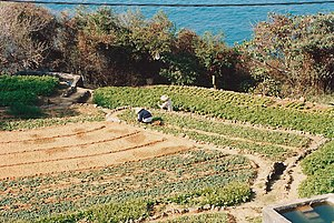 Market garden - A market garden on an outlying island of Hong Kong