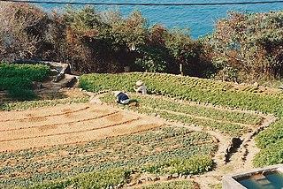 農地免補地價建平價樓建議最大得益者根本正是恒地本身,因為它就是擁有全港最多農地的地產商。(圖片:JackyR@Wikimedia)