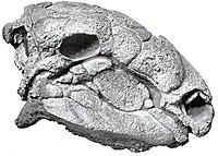 Panoplosaurus.jpg