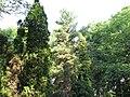 Parcul Central - Bistrita (964954489).jpg