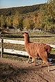 """Parcul de Animale - """"Moara de Vant"""" (8110015510).jpg"""
