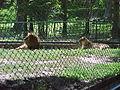 Parque Zoologico de Caricuao 2000 022.jpg