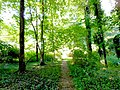 Path in Furness Park Wallingford PA.jpg