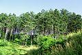 Pelagonia Plain 20.JPG