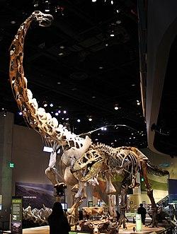 250px-Perot_Museum_Alamosaurus_and_Tyrannosaurus.jpg
