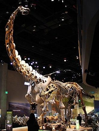 Alamosaurus - Restored skeletons of Alamosaurus and Tyrannosaurus at Perot Museum