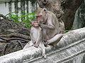 Phra Nakhon Khiri 0156.JPG