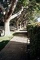 Piedmont CA street.JPG