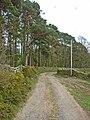 Pinewood near Edmondbyers - geograph.org.uk - 157158.jpg