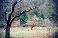 Piper Orchard row of trees 01.jpg