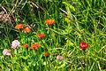 Plants from Sassolongo 37.jpg