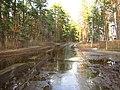 Pludi druvciema 2011 - panoramio (57).jpg