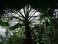 Poland. Warsaw. Powsin. Botanical Garden 146.jpg