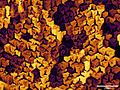 Porous silicon.jpg