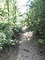 Possum Woods Conservation Area.JPG