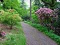 Průhonice, zámecký park, cesta s rododendrony II.jpg