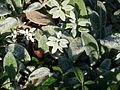 Princes Street Gardens, Nov 2011 (6321984385).jpg