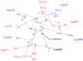 Proposed LAP-A active site.png