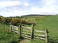 Public bridleway to Wooler Common - geograph.org.uk - 444975.jpg