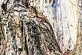Quirigua ruinas-lizard in tree (6849862786).jpg