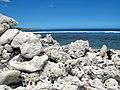 Réunion Strand Korallen.JPG